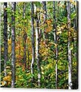 Autumn Forest Detail Acrylic Print