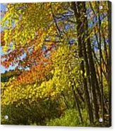 Autumn Forest Scene In West Michigan Acrylic Print