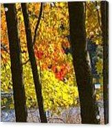 Autumn Forest Scene Acrylic Print