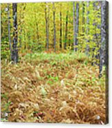 Autumn Forest - White Mountains New Hampshire Acrylic Print