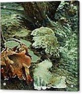 Autumn Frozen In Time Acrylic Print