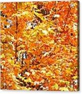 Autumn Fury Acrylic Print