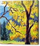 Autumn Gold Yosemite Valley Acrylic Print