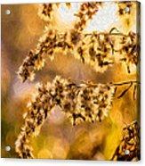 Autumn Goldenrod - Paint  Acrylic Print