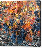 Autumn Grapes Acrylic Print