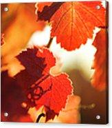Autumn Grapevine Leaves Acrylic Print by Charmian Vistaunet