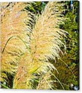 Autumn Grass Acrylic Print