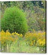 Autumn Grasslands Acrylic Print