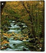Autumn Greenbriar Cascade Acrylic Print