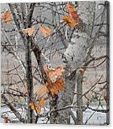 Autumn Grey Acrylic Print by Margaret McDermott