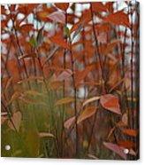 Autumn Harmony 3 Acrylic Print