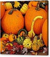 Autumn Harvest 5 Acrylic Print