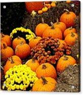 Autumn Harvest 6 Acrylic Print