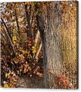 Autumn Hideaway Acrylic Print