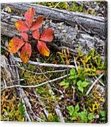 Autumn Highlights Acrylic Print