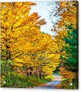 Autumn Hike - Paint Acrylic Print