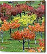 Autumn Hillside Orchard Acrylic Print