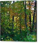 Autumn Hilltop  Acrylic Print
