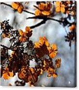 Tardiva Hydrangea Acrylic Print