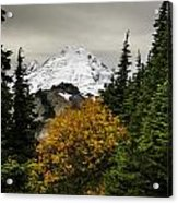 Autumn In Baker Acrylic Print by Blanca Braun