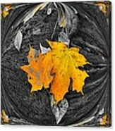 Autumn In Color Acrylic Print