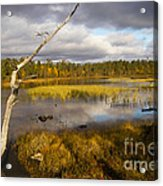 Autumn In Finland Near Inari Acrylic Print