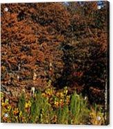 Autumn In Gruene Acrylic Print