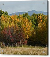 Autumn In Idaho Acrylic Print