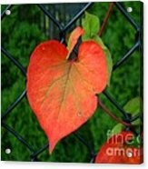 Autumn In July Acrylic Print