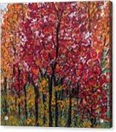 Autumn In Nashville Acrylic Print