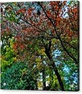 Autumn In Raleigh 009 Acrylic Print