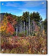 Autumn In The Adirondacks Acrylic Print by David Patterson
