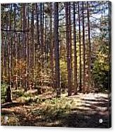 Autumn In The Pines Acrylic Print