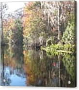Autumn In A Swamp Acrylic Print