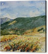 Harvest Time In Napa Valley Acrylic Print
