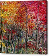 Autumn In The Woods Acrylic Print