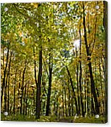 Autumn In Uw Arboretum In Madison Wisconsin Acrylic Print by Natural Focal Point Photography