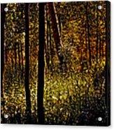 Autumn In Vail - Colorado Acrylic Print