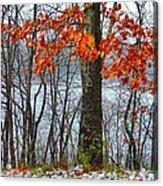 Autumn In Winter Acrylic Print
