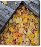 Autumn Incoming Acrylic Print