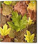 autumn is coming 5 - A carpet of autumn color leaves  Acrylic Print
