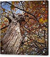 Autumn Is Here Acrylic Print