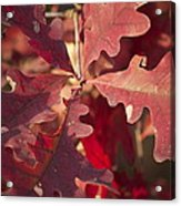 Autumn Is When Every Leaf Is A Flower Acrylic Print