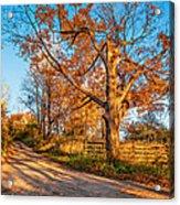 Autumn Lane Acrylic Print