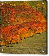 Autumn Lava Flow Acrylic Print
