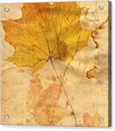 Autumn Leaf In Grunge Style Acrylic Print