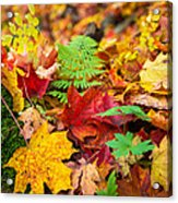 Autumn Leaf Salad Acrylic Print