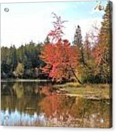 Autumn Leaning Tree Acrylic Print