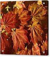 Autumn Leaves 00 Acrylic Print
