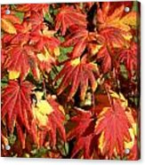 Autumn Leaves 07 Acrylic Print